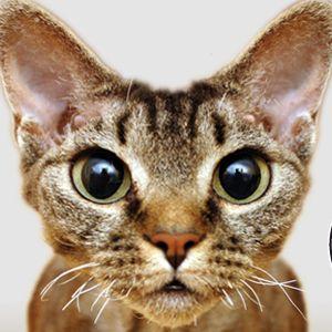 Międzynarodowa wystawa kotów rasowych