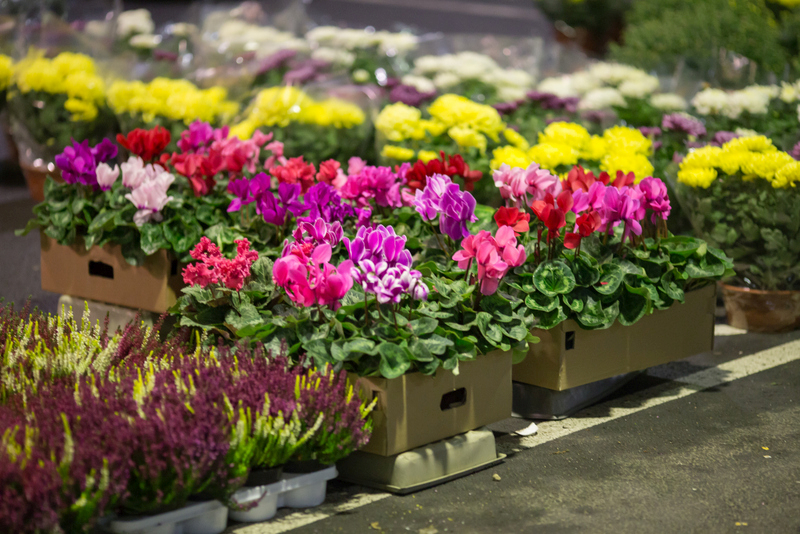 Ceny Kwiatow Doniczkowych Sprzedajemy Pl