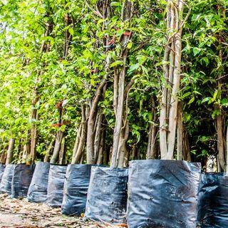 Bezpłatne szkolenie poświęcone dobrym praktykom utrzymania zieleni