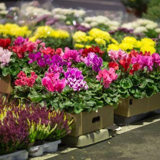 Dolnośląskie Centrum Hurtu Rolno-Spożywczego S.A. – giełda kwiatowa