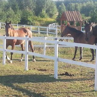 """Ośrodek Agroturystyczny """"Koński Dwór"""" – oferta jeździecka"""