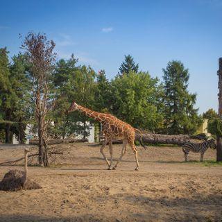 Zoo Wrocław
