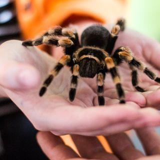 Wystawa pająków i skorupiaków w Sky Tower