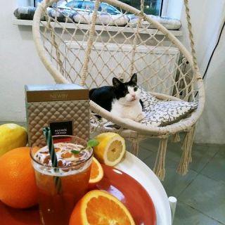 KOTON Kocia kawiarnia