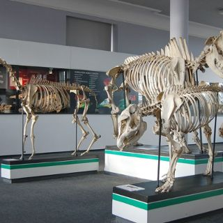 Naturkundemuseum der Universität Wrocław