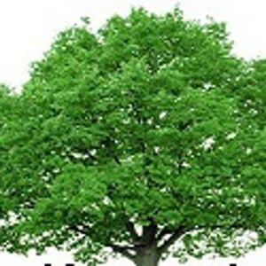 Posadź drzewa ze Strażą Miejską