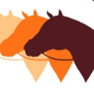 Stajnia Krzyżanowice – oferta jeździecka
