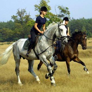 Ośrodek Jazdy Konnej i Klub Jeździecki ARAT – Oferta jeździecka