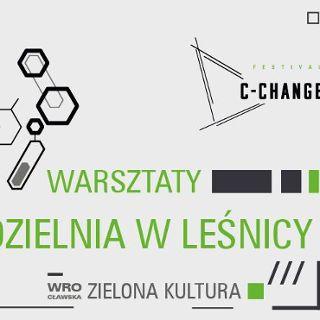 C-Change warsztaty