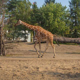 Zoo i Afrykarium – godziny otwarcia w Wielkanoc