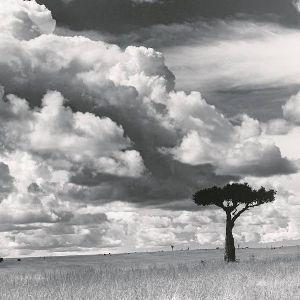 Drzewa: wystawa fotografii Stefana Arczyńskiego