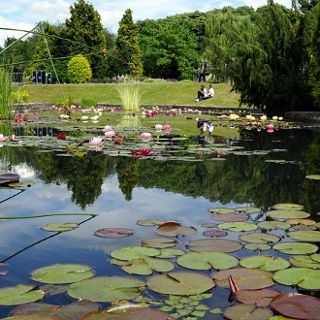 Ogród Botaniczny – spacer po ogrodzie