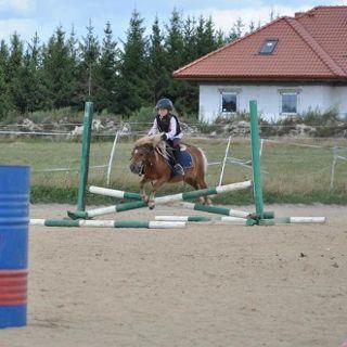 Stajnia ARDENA – oferta jeździecka
