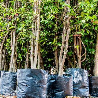 Odpady się liczą... drzewami. Zdobądź jedno z 800 drzew