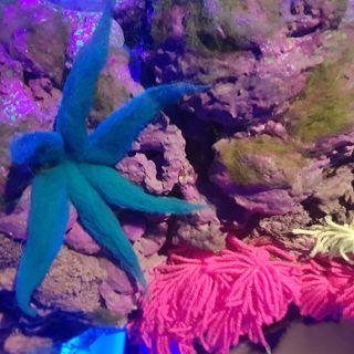Rafy koralowe z recyklingu