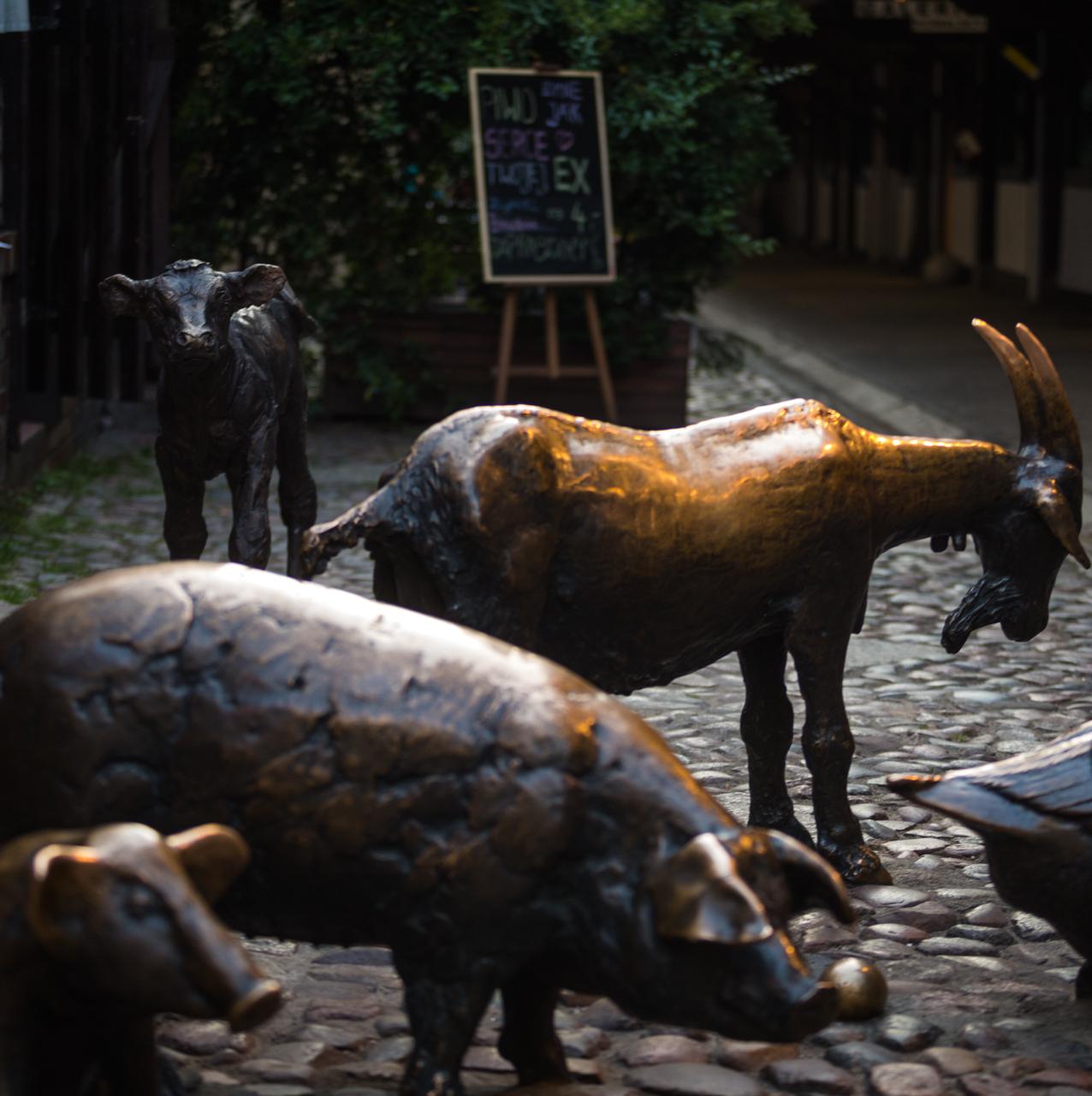 Jatki - Grupa Zwierząt Rzeźnych