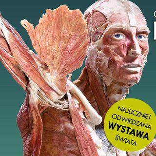 Wystawa BODY WORLDS – VITAL w hali IASE