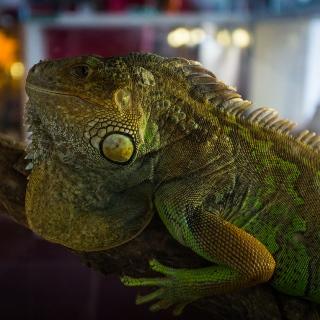 Exotic Animals Exhibition